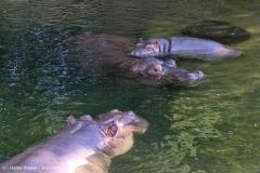 Zoo_Hannover_020916_IMG_7437