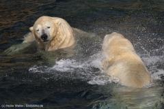 Zoo_Hannover_020916_IMG_7489