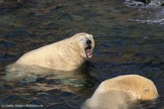 Zoo_Hannover_020916_IMG_7495