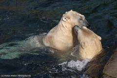 Zoo_Hannover_020916_IMG_7508