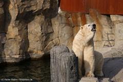 Zoo_Hannover_020916_IMG_7570