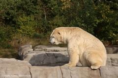 Zoo_Hannover_020916_IMG_7593