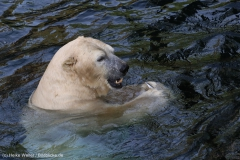 Zoo_Hannover_020916_IMG_7612