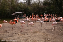 Zoo_Hannover_030416_IMG_0514