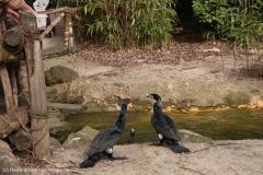 Zoo_Hannover_030416_IMG_0529