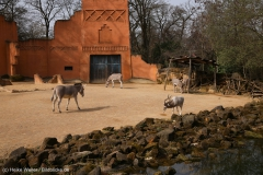 Zoo_Hannover_030416_IMG_0551