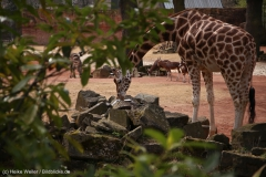 Zoo_Hannover_030416_IMG_0567