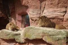 Zoo_Hannover_030416_IMG_0595