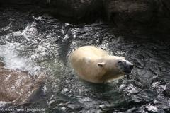 Zoo_Hannover_030416_IMG_0621