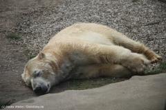 Zoo_Hannover_030416_IMG_0648