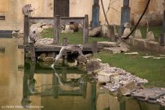 Zoo_Hannover_030416_IMG_0667