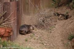 Zoo_Hannover_030416_IMG_0682
