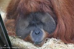 Zoo_Hannover_030416_IMG_0722