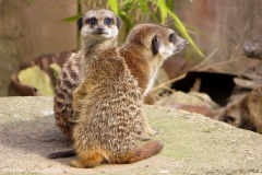 Zoo_Hannover_030416_IMG_8446