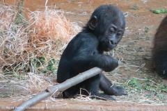 Zoo_Hannover_030416_IMG_8459