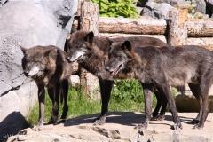 Zoo-Hannover-030610-IMG_2714