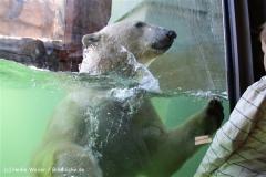 Zoo-Hannover-030610-IMG_2964