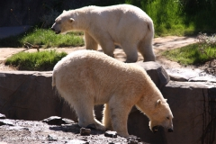 Zoo-Hannover-030610-IMG_3059