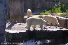 Zoo-Hannover-030610-IMG_3068