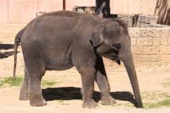 Zoo-Hannover-030610-IMG_3107