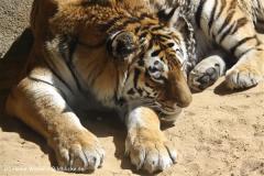 Zoo-Hannover-030610-IMG_3129-2
