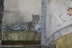 Zoo-Hannover-030610-IMG_3152