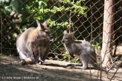 Zoo-Hannover-030610-IMG_3175