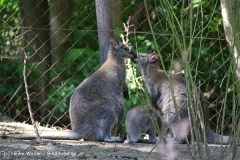 Zoo-Hannover-030610-IMG_3180-2