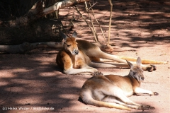 Zoo-Hannover-030610-IMG_3234
