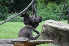 Zoo_Hannover_050713_IMG_2891
