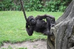 Zoo_Hannover_050713_IMG_2899