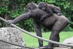 Zoo_Hannover_050713_IMG_2908