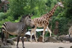 Zoo_Hannover_050713_IMG_2924