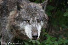 Zoo_Hannover_050713_IMG_2950