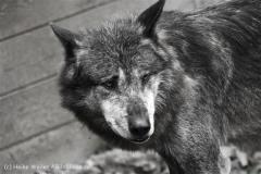 Zoo_Hannover_050713_IMG_2953