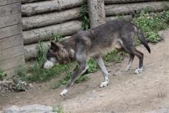Zoo_Hannover_050713_IMG_2963