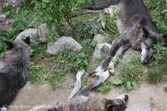Zoo_Hannover_050713_IMG_2965