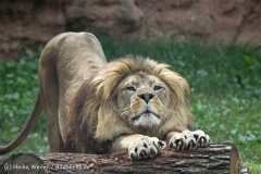 Zoo_Hannover_050914_copy_Heike_Weiler_IMG_6619