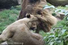 Zoo_Hannover_050914_copy_Heike_Weiler_IMG_6627