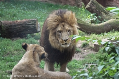 Zoo_Hannover_050914_copy_Heike_Weiler_IMG_6630