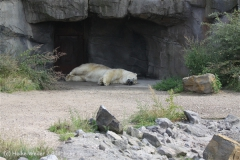 Zoo_Hannover_050914_copy_Heike_Weiler_IMG_6657
