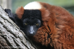 Zoo_Hannover_050914_copy_Heike_Weiler_IMG_6671