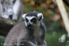 Zoo_Hannover_050914_copy_Heike_Weiler_IMG_6681