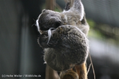 Zoo_Hannover_050914_copy_Heike_Weiler_IMG_6686