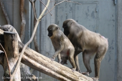 Zoo_Hannover_050914_copy_Heike_Weiler_IMG_6701