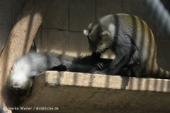Zoo_Hannover_050914_copy_Heike_Weiler_IMG_6706