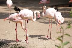 Zoo_Hannover_040621_IMG_7266