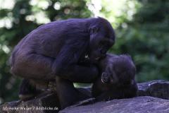 Zoo_Hannover_060614_IMG_9408