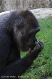 Zoo_Hannover_060614_IMG_9416