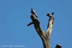 Zoo_Hannover_060614_IMG_9423